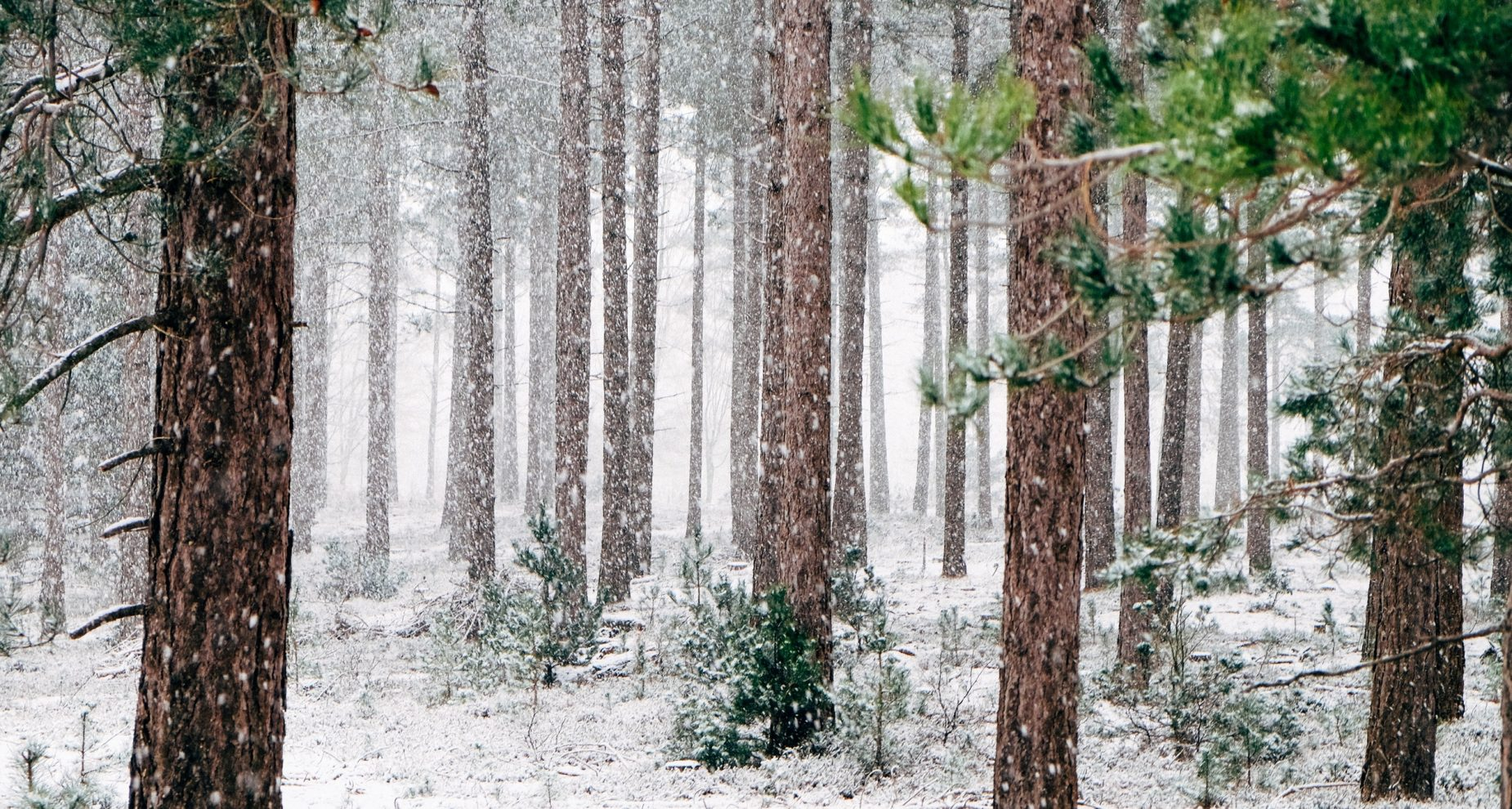woods-690257
